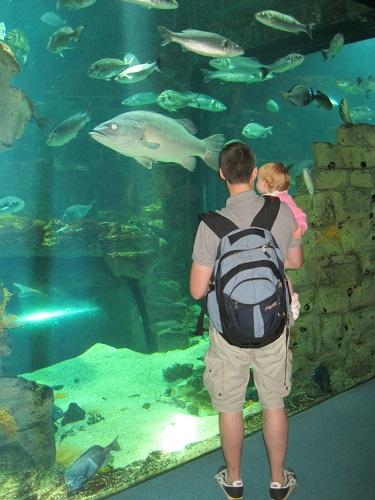 Viewing tanks at La Rochelle aquariurm