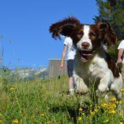 dog friendly holidays to France