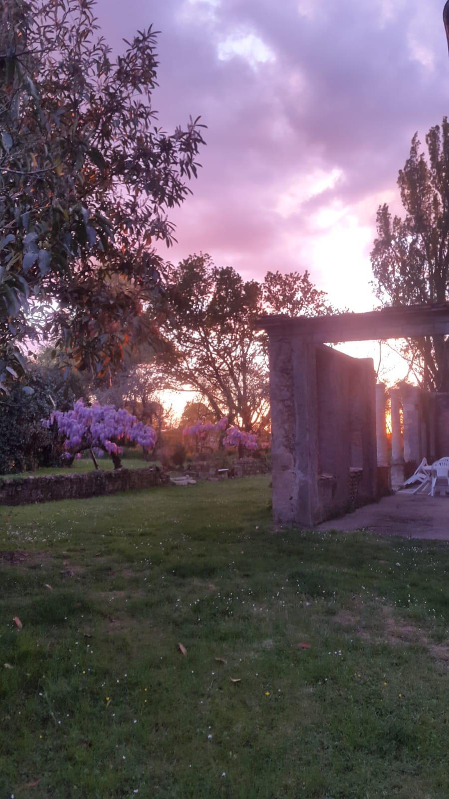 Chateau Duviella garden